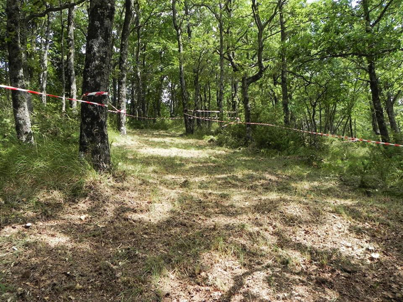 Sentieri Bike Park in mezzo ai boschi di rimini